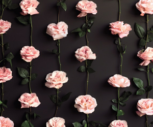 patterns, 🌹, and wallpaper image