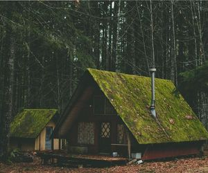 cozy, green, and home image