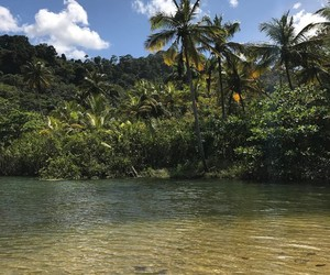 tropical, green, and travel image
