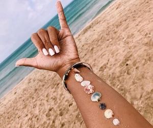 beach and seashells image