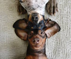 baby animals, puppy, and cute animals image