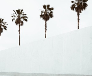 white, palms, and aesthetic image