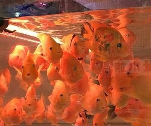 fish, orange, and aesthetic image