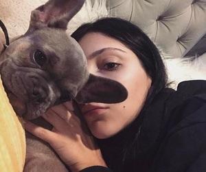 amanda, dog, and dogs image