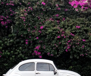 car, contrast, and flowers image