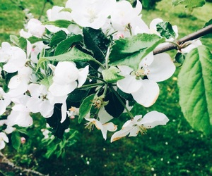 apple tree, spring, and blossom image