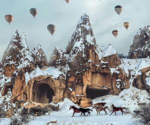 animal, balloons, and high image