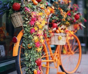 bicicle, bike, and flower image