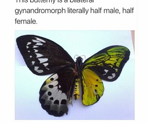butterfly, female, and male image