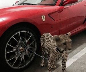 ferrari, luxury, and red image