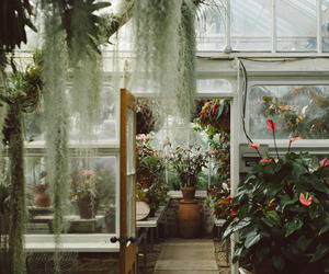 plants, greenhouse, and landscape image