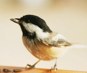 animal, bird, and photography image