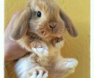 animal, bunny, and rabbit image