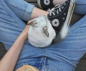 animal, girl, and jeans image