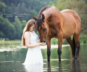 horse, pferd, and riding image