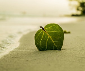 beach, leaves, and photography image