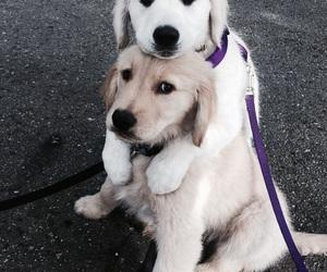bff, dog, and white image
