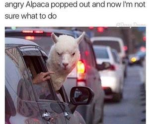 funny, lol, and alpaca image