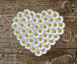 flowers, daisy, and love image