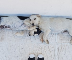 adidas and dogs image