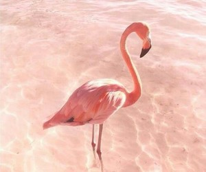 flamingo, pink, and pastel image
