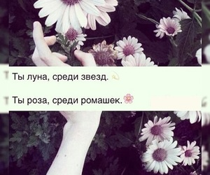 quotes, текст, and text image
