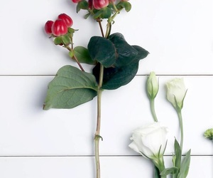 beauty, leaves, and rose image