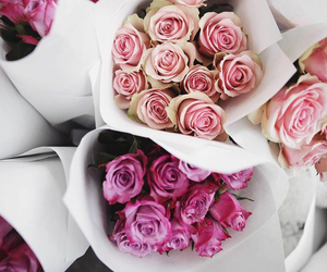 beautiful, roses, and flower image