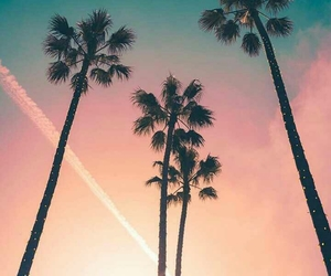 palm trees, summer, and california image