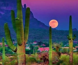 beauty, desert, and photography image