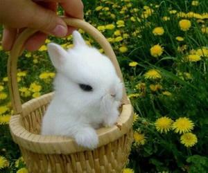 flowers, bunny, and animal image