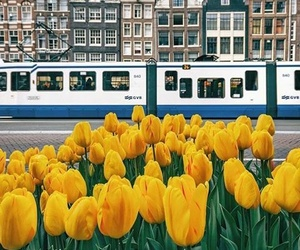 flowers, amsterdam, and wallpaper image