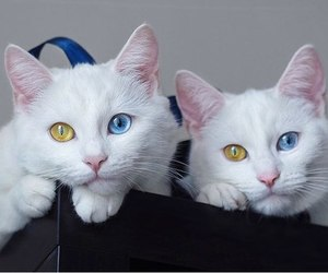 animals, cat, and pretty image