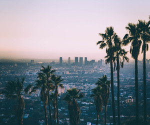 city, los angeles, and palms image