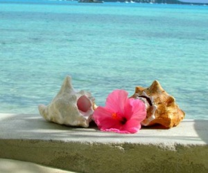 beautiful, ocean, and pink flower image
