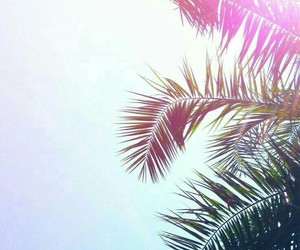 palm tree, wallpaper, and sky image