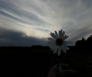 flower and sky image