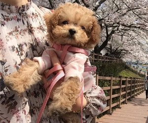 dogs, pretty, and pink image