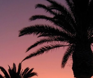 palms, patterns, and places image