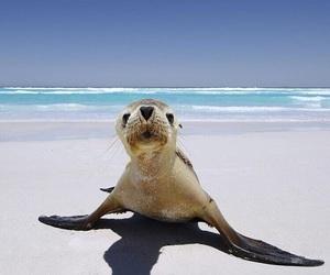 cute, seal, and beach image