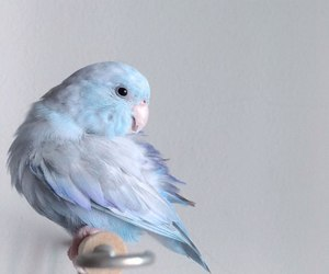 bird, blue, and animals image