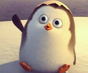 cute, penguin, and hello image
