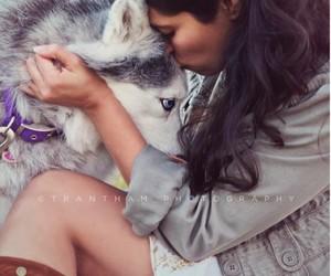 dog and hasky siberiano image