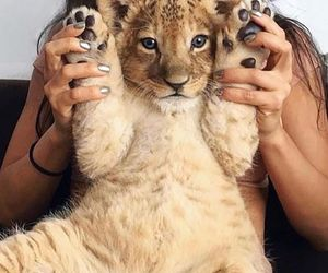 adorable, tiger, and cute image