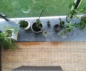 green, lovely, and plants image