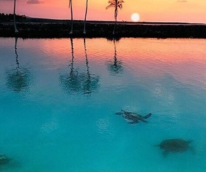 sunset, turtles, and beach image