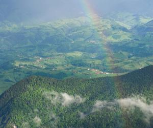 florest, landscape, and nature image