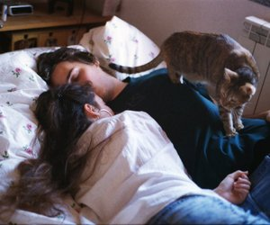 cat, couple, and love image