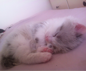 cat, cute, and pale image