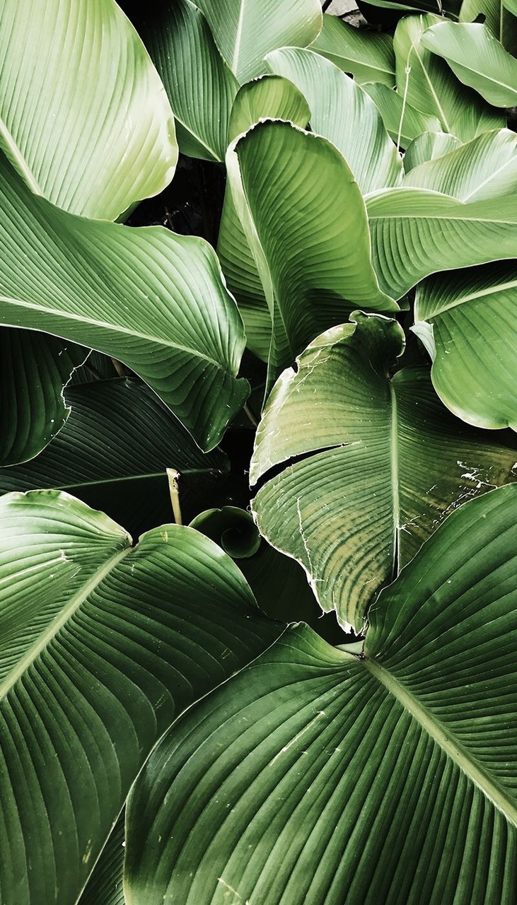 aesthetic, banana leaf, and mother nature image
